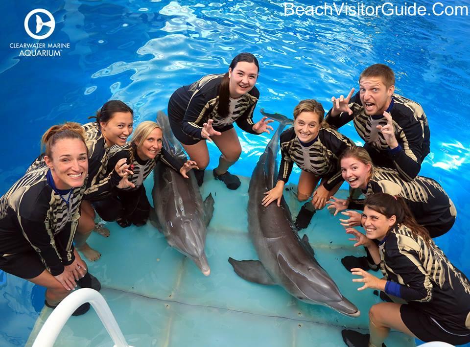 Clearwater Marine Aquarium - Beach Visitor Guide on